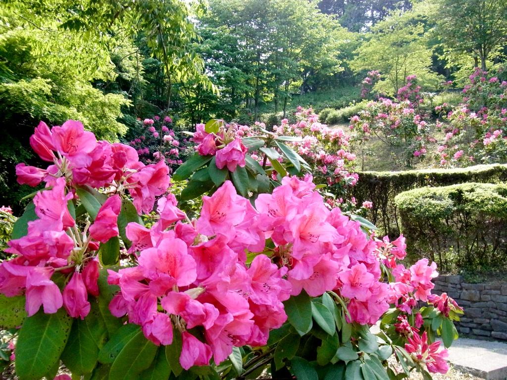 2017年5月22日 百花園