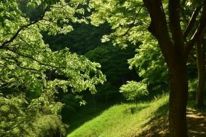 新緑の世界_R_R