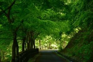 新緑の回廊_R_R