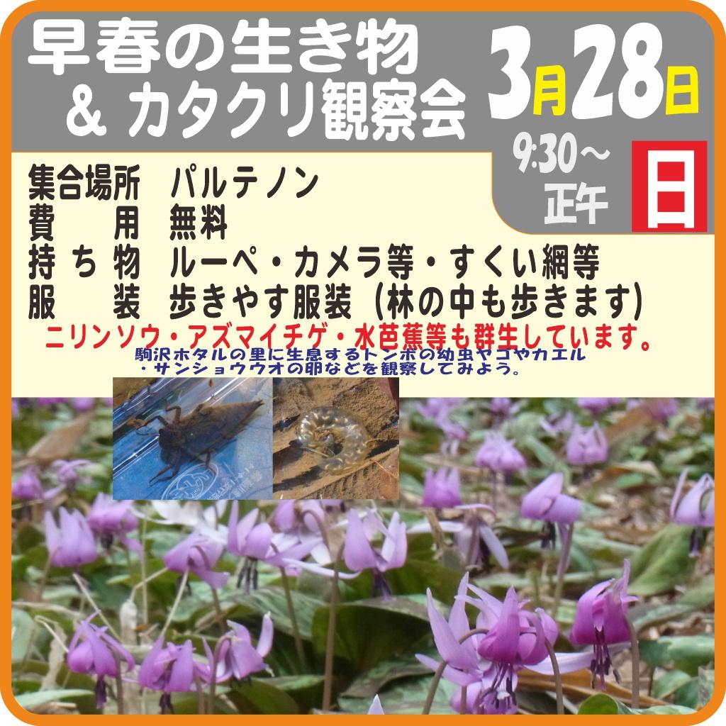 早春の生き物&カタクリ観察会