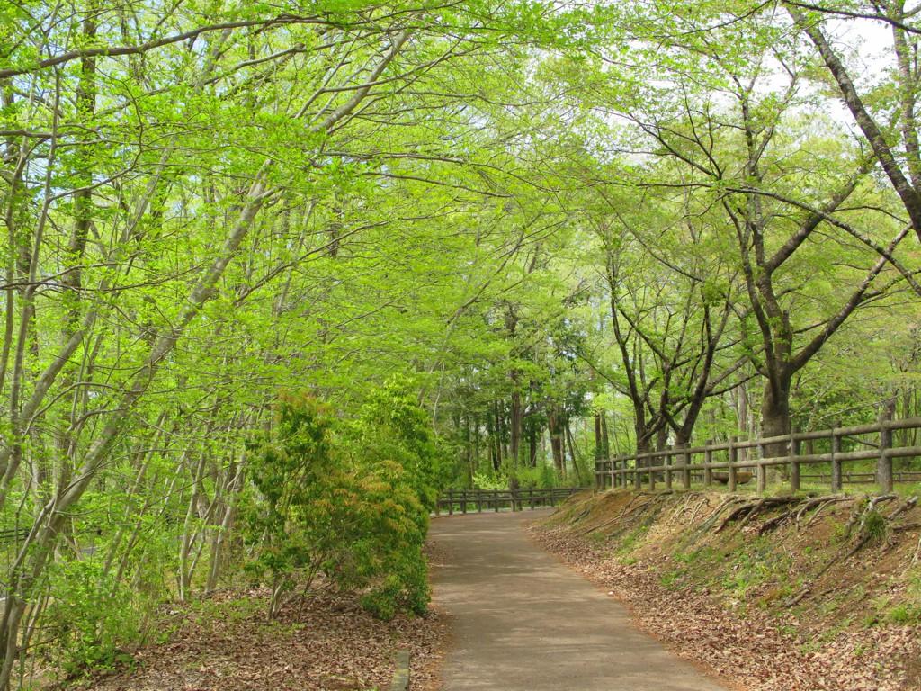 新緑 令和3年4月14日(曇り)始まりました。